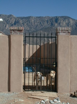 Gate with spears and happy dogs